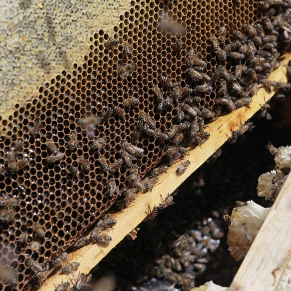 Gift of 12 Hives of Honeybees