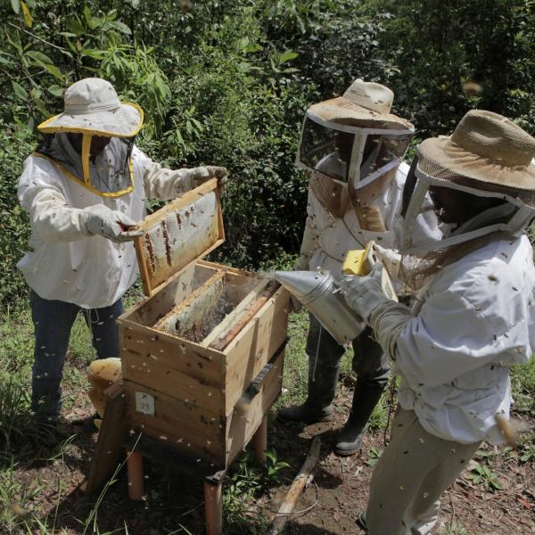 Gift of 3 Hives of Honeybees