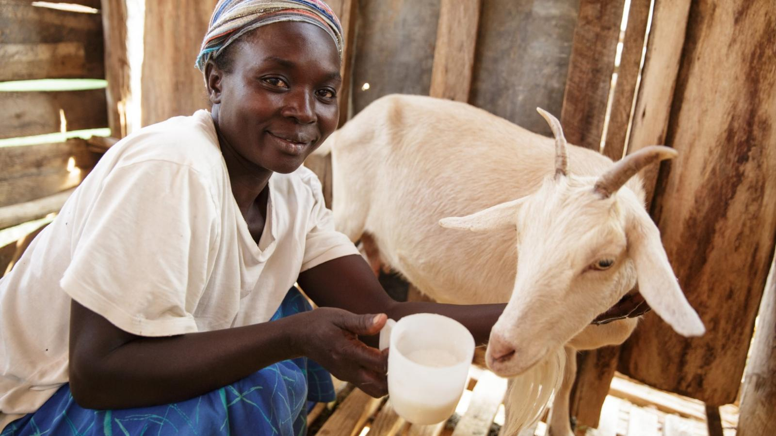 Share of an in-kid dairy goat